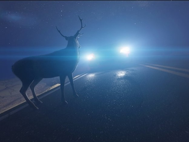 Man Tending to Injured Deer Killed After Being Struck in Piscataway, New Jersey
